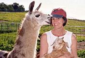 Llama greeting visitor