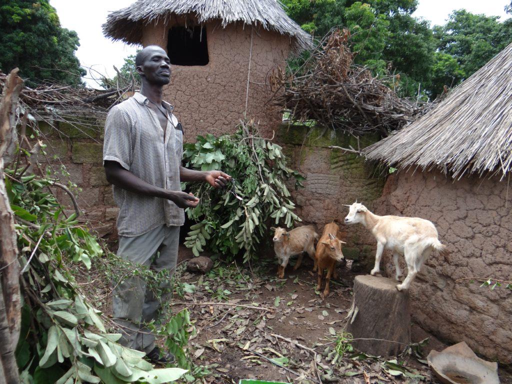 Goat farmer. Lofine, Mali