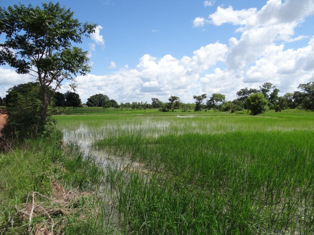 Flooded Fields During Rainy Season