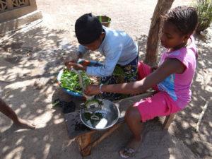 Grinding Cassava Leaves for stew
