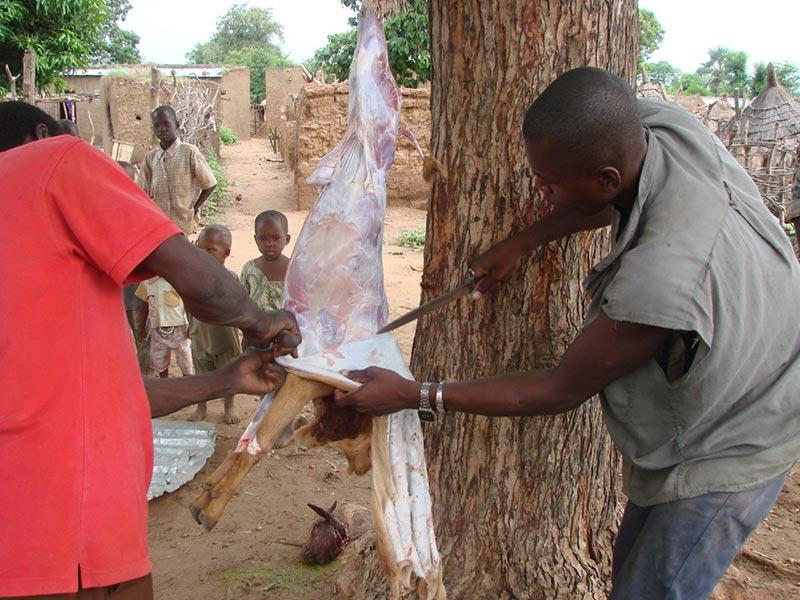 Preparation of goat