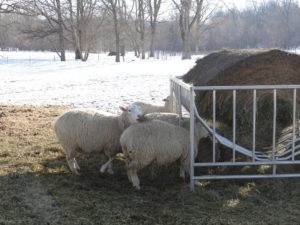 Figuring out new hay feeder