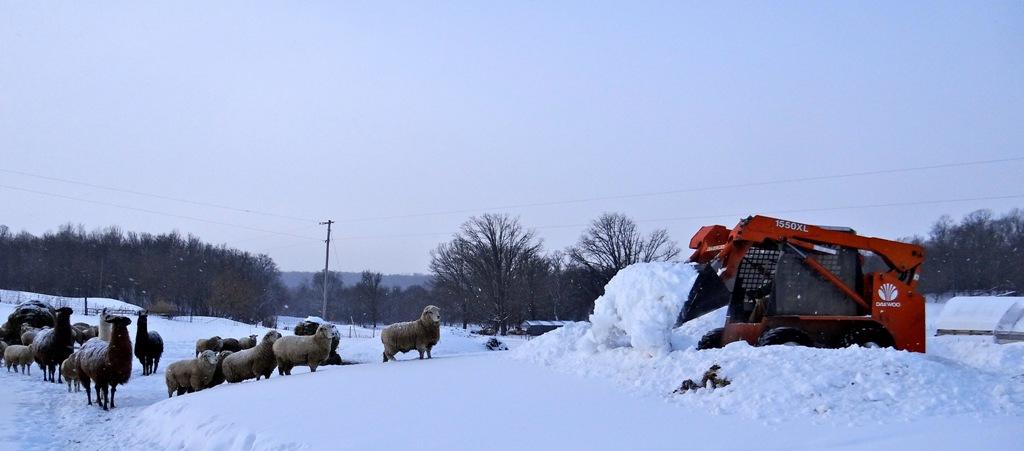 Digging through the snow