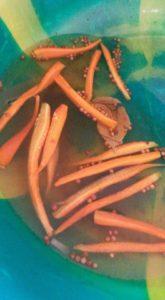 Pickling carrots