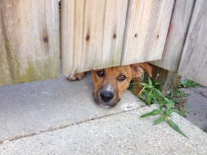 Peeking under gate